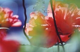 redpoppy for photo tip in canva